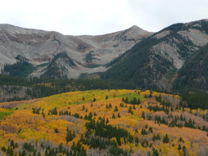 aspen carpet at the foot of the Rockies